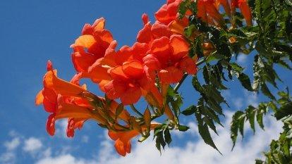 300noms de fleurs