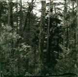 Halftone Collodion Print on Black Acrylic