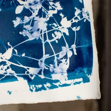 Cyanotype detail