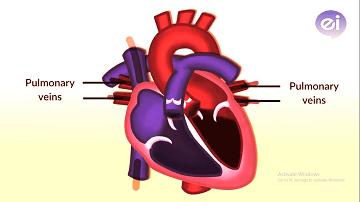 Heart_working