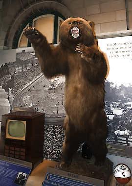 Schmalz Bear