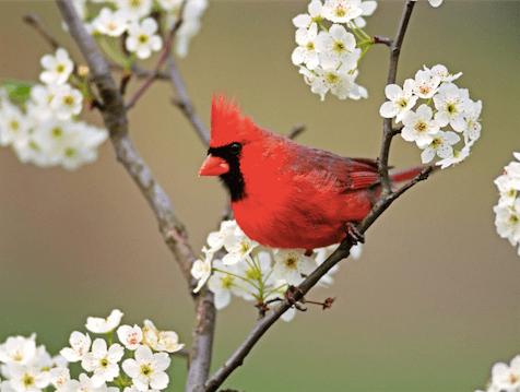 Bird & Flowers