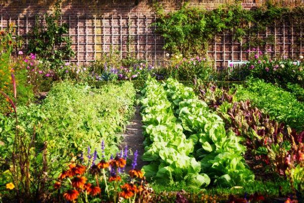Préserver son jardin