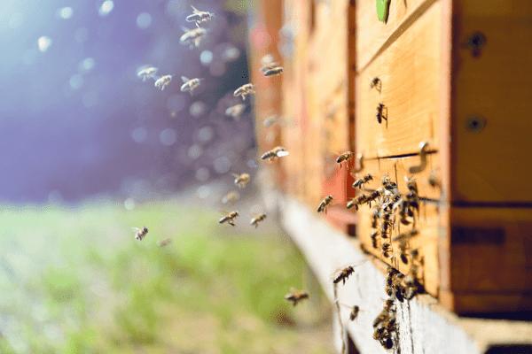 emballage en cire d'abeille