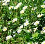 Abbadia di Fiastra Flowers