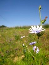 MarcheCountrysidePurpleflower