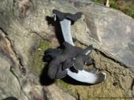Trompeta de los muertos (Craterellus cornucopioides)