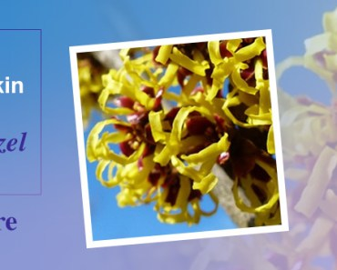 Witch Hazel for Skin Tightening