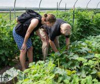 Ga Tech | Hickory Grove Farm