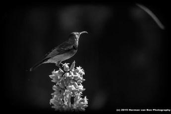 bird6june15