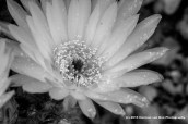 cactus310ct15-7