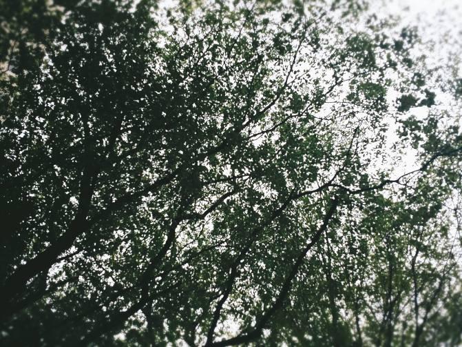 木々が天高く