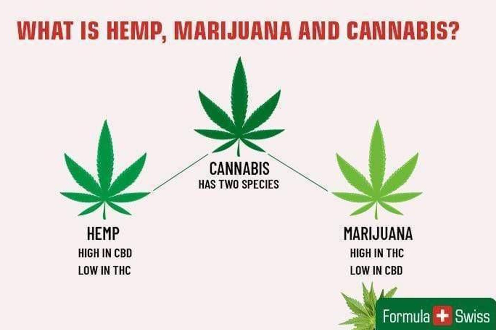 A graphic picture with a Hemp leaf, a Cannabis leaf, and a Marijuana leaf with text asking: What is Hemp, Marijuana, and Cannabis?