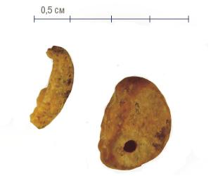 Фаланга мізинця стародавньої людини, виявлена в Денисовій печері