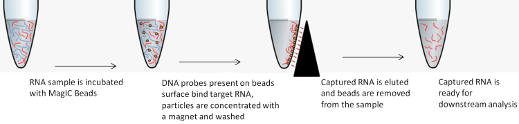 RNA Seq MagIC Beads SARS-CoV-2 workflow