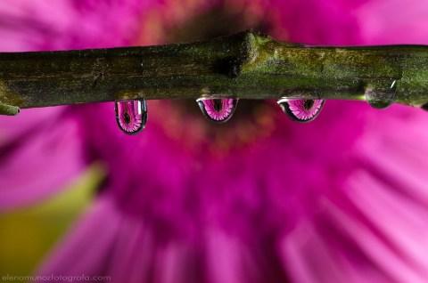 Flor en cápsulas