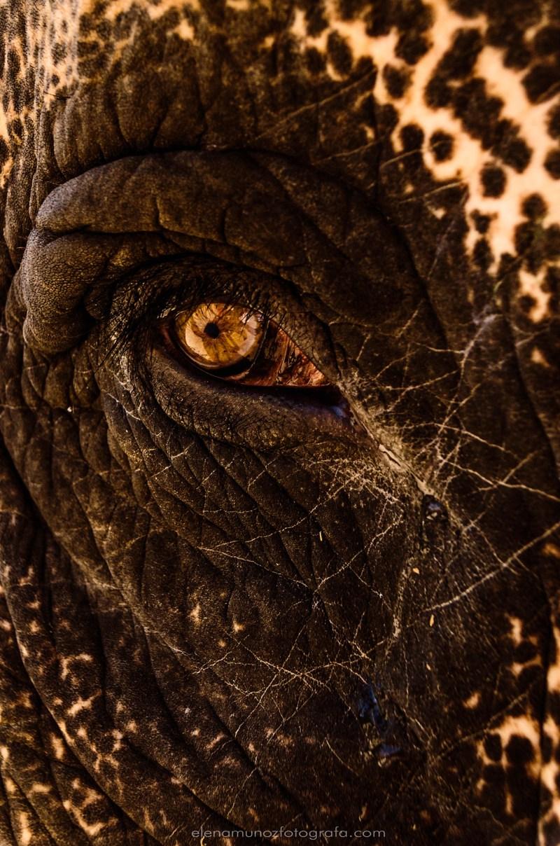 Lágrimas de elefante