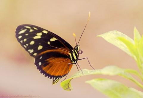 Mariposa posada en una hoja