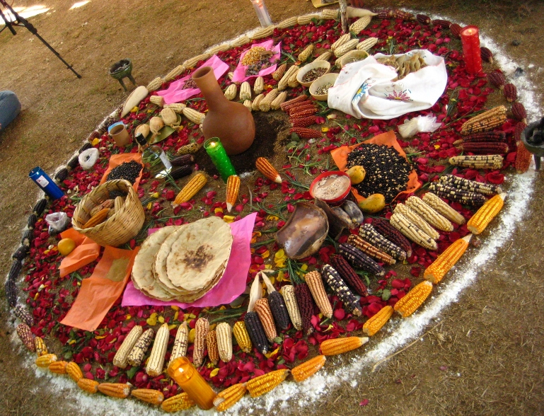 Corn offering at an event in Oaxaca.