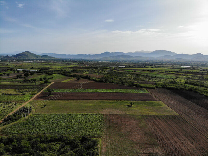 Cultivos de maíz de Magdalena Ocotlán