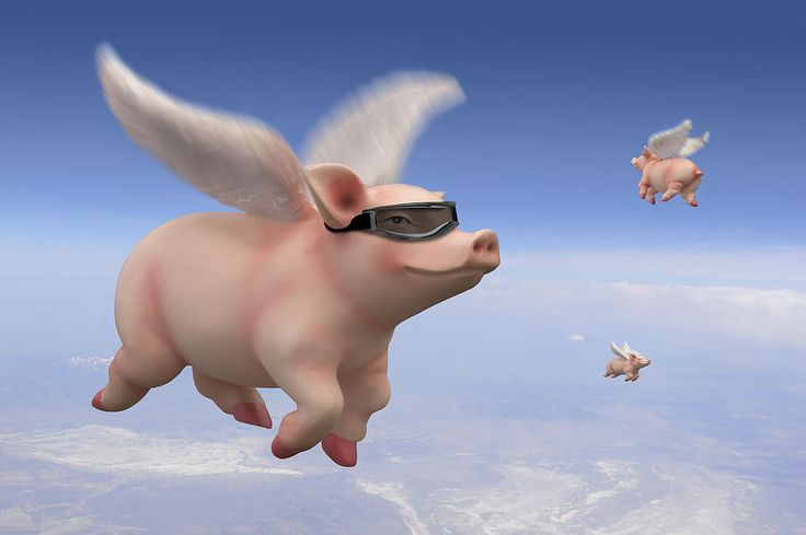 Flying pigs - TOP 10 Idioms!!!