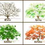 The Seasons - Phrasal Verbs about Weather