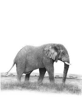 elephant-2-ashleigh