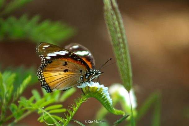 Butterfly resting on a plant