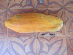 IMG_2828.huge papaya