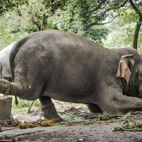 """""""We Have to Release Them. We Have to Release Them. We Have to Release Them.""""  Liz Jones and the Elephants  Part 2"""