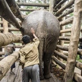 """""""We Have to Release Them. We Have to Release Them. We Have to Release Them.""""  Liz Jones and the Elephants  Part 3"""