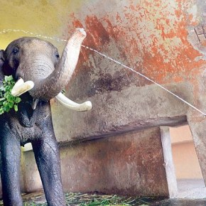 Supreme Court in India to Decide on How to Protect Captive Elephants of Kerala