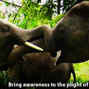 Happy World Elephant Day