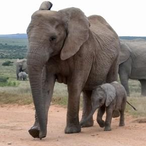 National Elephant Appreciation Day 22 September 2015