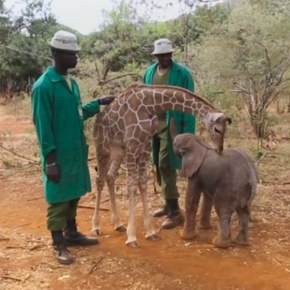 How an Orphaned Baby Elephant Became Inseparable From an Rescued Baby Giraffe