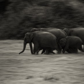 """Beautiful & Haunting Song """"Elephant in My Heart"""" Brings Attention to the Desperate Situation Our Elephants Are In"""