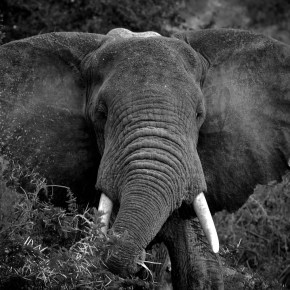 National Elephant Appreciation Day 22 September 2016