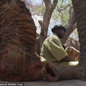 """Every Minute of My Day Revolves Around Elephants"": Meet the Man Who is Dedicating His Life to Elephant Orphans as Head Keeper at David Sheldrick Wildlife Trust's Rehabilitation Unit at Ithumba in Kenya, Africa"