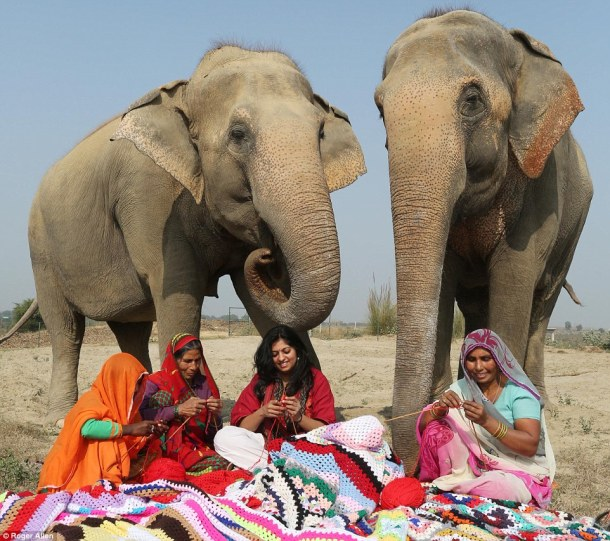 elephants-in-knitwear-and-leggings-the-daily-mail