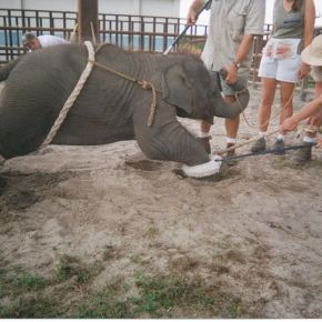 "Melha Shrine Circus Chairman Puts Profits Above Cruelty as Allen Zippin is Determined to Bring the Hamid ""Rent an Elephant"" Elephants Back to Perform in Their Big Top Acts"