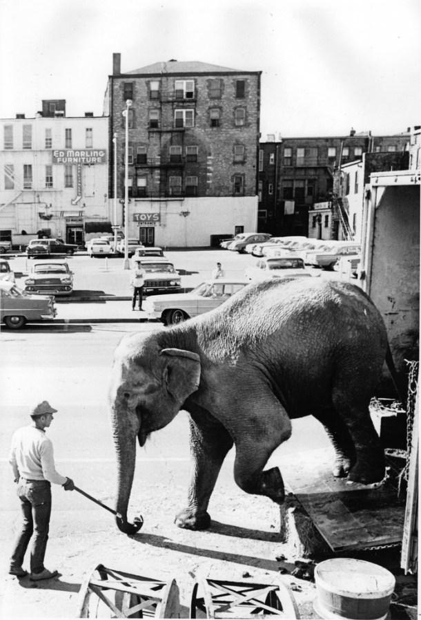 elephant-circus-cc-flicker-by-marion-doss-historic-hamid-morton-shrine-circus-1964