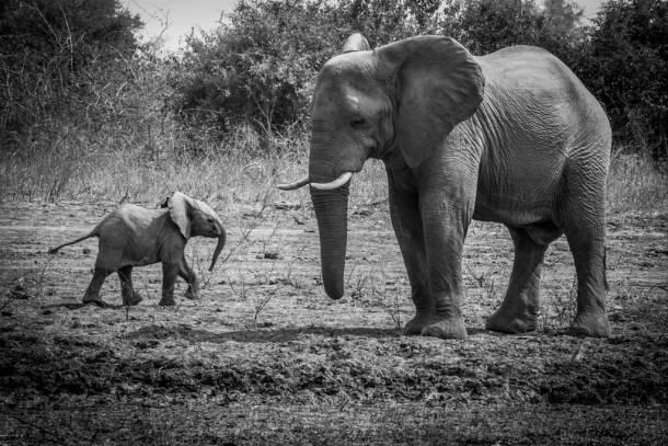 Elephants mama and baby ele by alex berger cc flickr