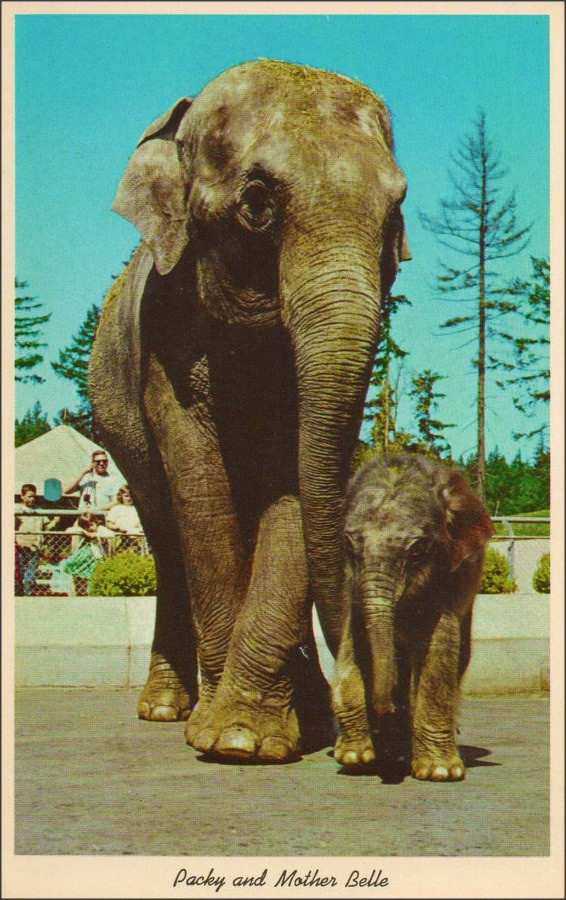 elephants packy and mom belle oregon zoo cc flickr.jpg