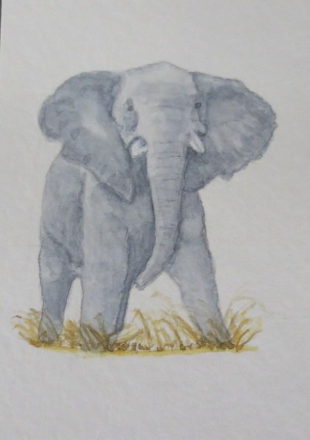 Elephant Art by Addison grey ele small tusks facing forward (3)