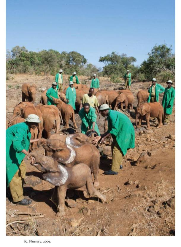 elephants Posted on CC Flickr 7 Photos all copyrights held by Macmillan Books this photo including DSWT nursery 2009 (5)