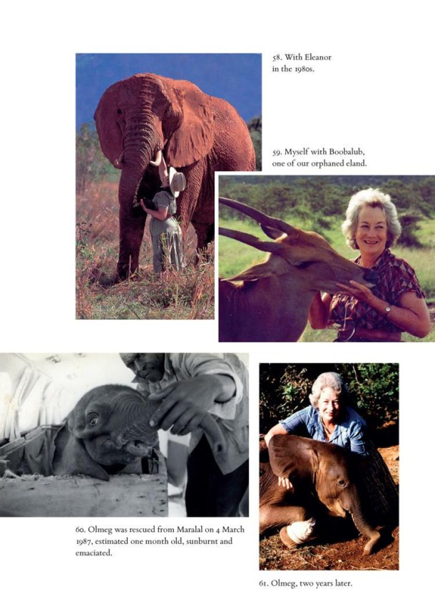 elephants Posted on CC Flickr 7 Photos all copyrights held by Macmillan Books this photo including Eleanor 1980s and Olmeg