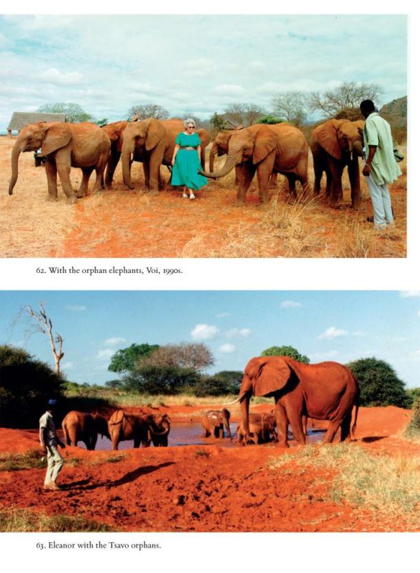 elephants Posted on CC Flickr 7 Photos all copyrights held by Macmillan Books this photo including Eleanor with Tsavo orphans (3)