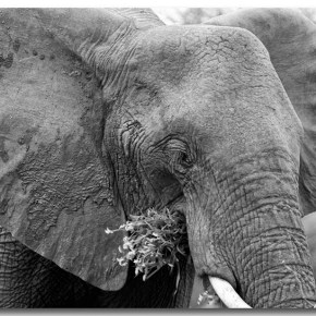 Celebrate National Elephant Appreciation Day 22 September 2017 & Share in This VIDEO Moment as an Elephant Herd Celebrates the Life of a Newborn Baby Elephant