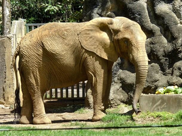 Mundi p r zoo elephant by damiandude cc flickr 17277247516_0b6f4dd7fd_b