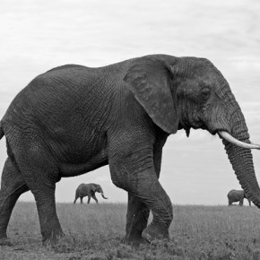 Earth Day 2018 : Make This Day Count, For Our Elephants